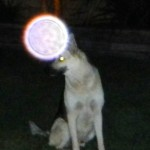 35a) A sample picture of orbs that appear near my dog, Shadow on a regular basis.